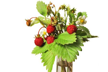 Bunch of wild strawberry isolated on white background