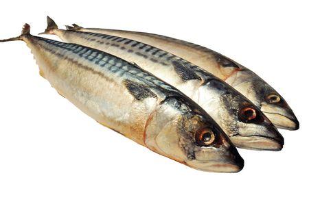 Three frozen mackerels isolated over white Stock Photo