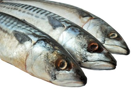 tiddler: Three frozen mackerels close-up isolated over white Stock Photo