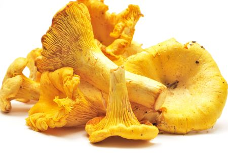 Fresh raw chanterelles isolated on white background