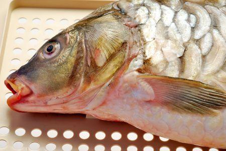 Fresh raw carp on textured surface