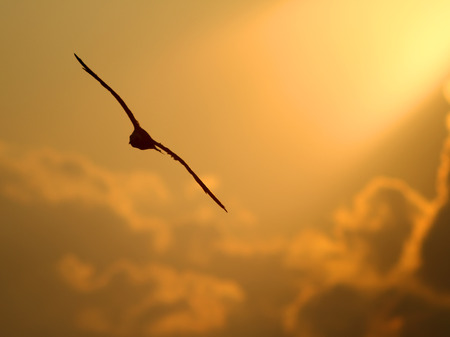 seagulls sky flying flying in the warm rays of the sun Stock Photo