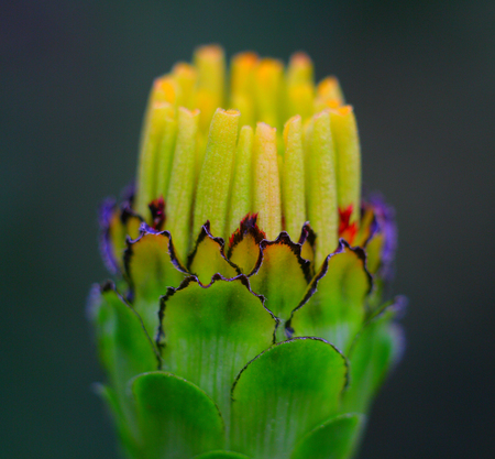flower sprout blossoming flower nature closeup photography