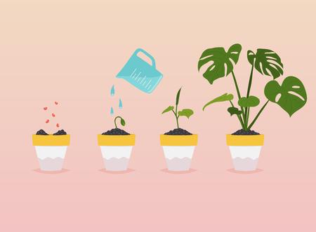 Piantare fasi di crescita. Timeline Infographic di piantare l'albero. Concetto di illustrazione vettoriale moderno stile di design piatto.