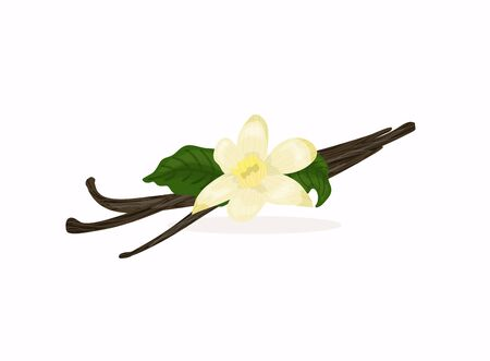 Flowers and seeds sticks vanilla orchid. Vanilla icon. Vector illustration.