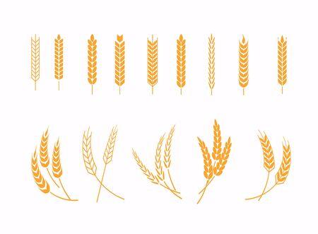 Zestaw ikon uszy pszenicy i elementów projektu pszenicy. Zbierz ziarno pszenicy, łodygę ryżu wzrostu i pełne ziarna chleba lub pożywne zboża polne. Ilustracje wektorowe