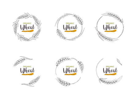 Paddy Wheat organic grain products food banner sign vector design.