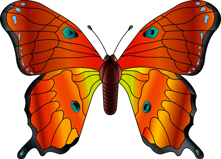 diurnal: butterfly vector