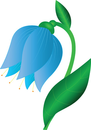 haulm: vector illustration of a bell flower
