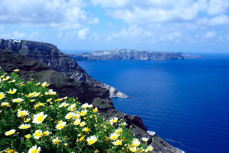 Daisy wildflowers on a background of blue sky, blue sea and island. Summer sunny morning on the island of Santorini, Greece. Euro travel.