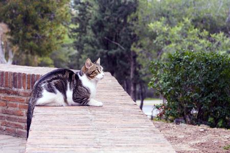 Eine schwarz-weiße Katze, die in der Festung von Gibralfaro, Malaga, lebt, wird vor dem Hintergrund von Nadelbäumen fotografiert. Sieht nachdenklich in die Ferne. Standard-Bild