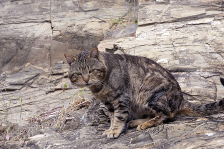 A funny striped brown stray cat sits on a rock of the same color. Masking an animal. Animal rights protection.