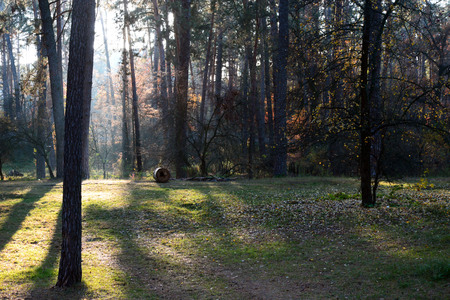 The suns rays make their way through the trees in the autumn forest, the stray dog ??found its home in the forest. And next to a place for a picnic.
