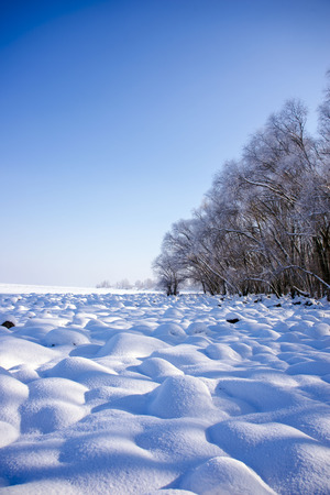 Beautiful winter landscape: large snow drifts and trees covered with snow on a sunny frosty day. Winter fairy tale in Ukraine.