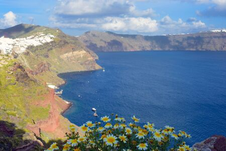 Wild white daisies on the background of the sea. Beautiful island of Santorini, Greece. The city of Oia on the island of Santorini. Greek journey. Sunset.
