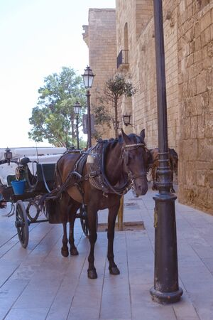 Palma de Mallorca, Spain, the Cathedral of Santa Maria, as well as La Ceu. A tired horse harnessed to the carriage near the walls of the cathedral awaits tourists. The carriage for walks. Imagens