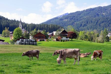A cows grazes in a green meadow. Early morning in Austria. Traditional Austrian landscape: mountains, cozy houses and green lawns. Euro trip. Feeling of calm and stability.
