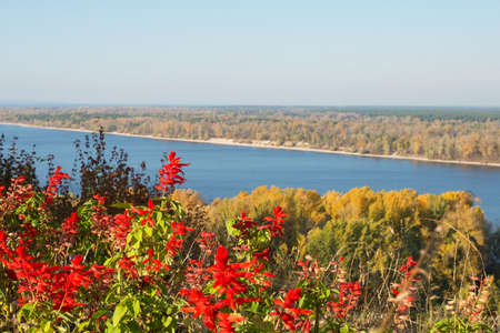 Bright red Salvia flowers against the background of the Ukrainian landscape. Golden autumn in Ukraine. View of the Dnieper, a small island and yellow trees in the city of Kanev, Ukraine. Banque d'images
