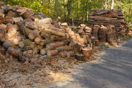 A pile of cut wooden logs on a sawmill. Wood harvesting.