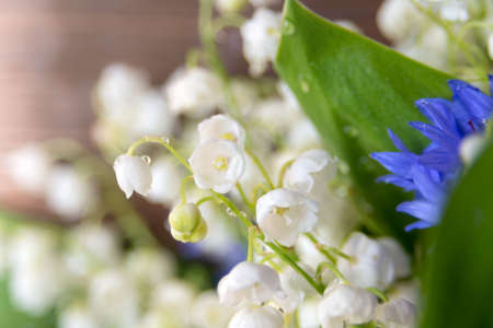Beautiful delicate white flowers of Lily of the valley. Bouquet of spring flowers Convallaria close-up. Reklamní fotografie