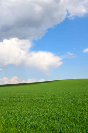 Fresh green young wheat on a background of blue sky with clouds. Beautiful rural landscape. Travel Ukraine. Vertical oriental.