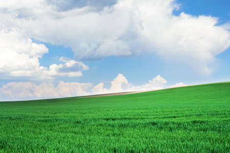 Fresh green young wheat on a background of blue sky with clouds. Beautiful rural landscape. Travel Ukraine. Reklamní fotografie