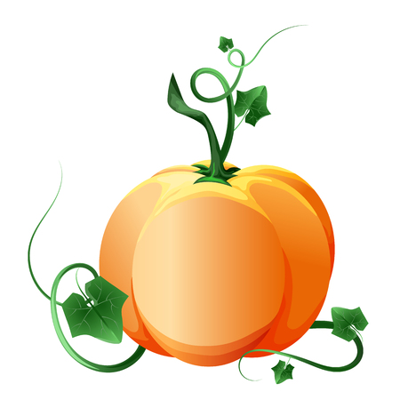 Ripe pumpkin with green leaves.