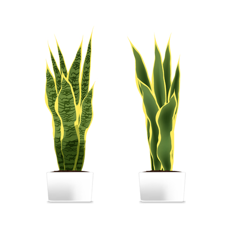 Spotted plant (sansevieria) in a white pot. Element of home decor. The symbol of growth and ecology. Vector illustration. Eps 10