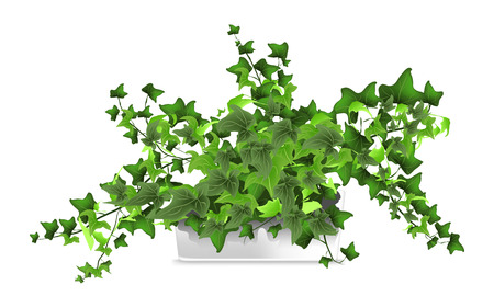 Spotted plant (hedera, ivy) in a white pot. Element of home decor. The symbol of growth and ecology. Vector illustration. Eps 10 Vettoriali