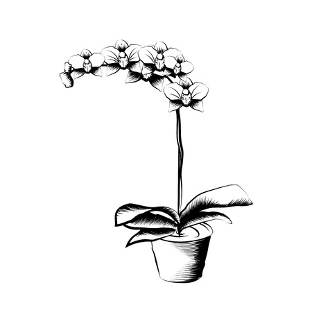 Hand drawn orchid in a clay pot. Black and white sketch. Element of home decor. The symbol of growth and ecology. Vector illustration. Vectores