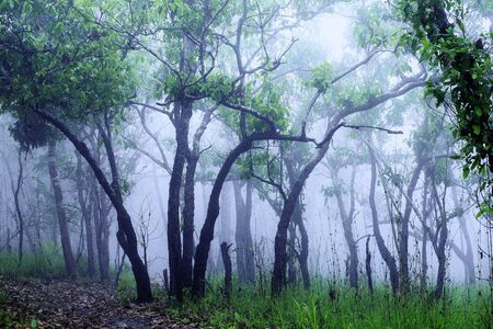 White mist in the midst of abundant nature. In the morning there is a thick white mist surrounded by trees.