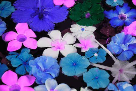 flores exoticas: Tropocal de flores ex�ticas en el agua