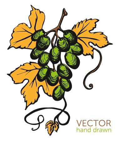 New wine Beaujolais nouveau Vector