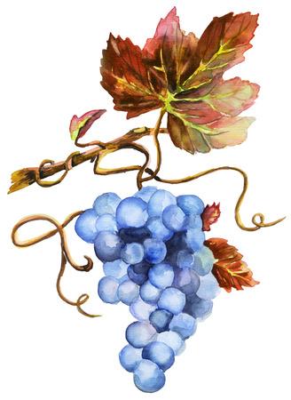 New wine Beaujolais nouveau, Watercolor Stock fotó