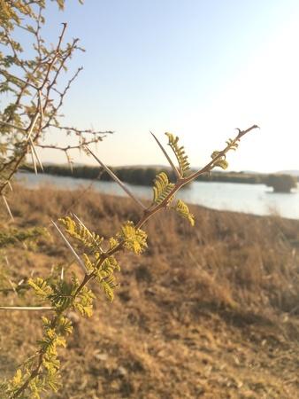thorn bush: Sun kissed thorn bush. Stock Photo