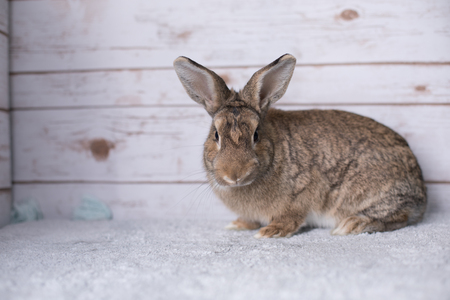 Beautiful little bunny on a rug at home Stock Photo