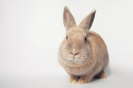 Adorable little rabbit with sily facial expression