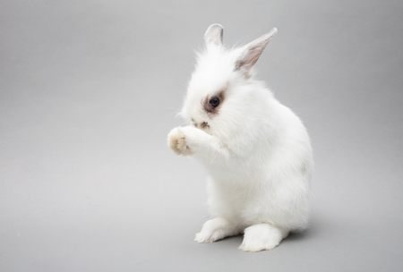Cute white baby bunny rabbit on a seamless light backgroun clean 写真素材