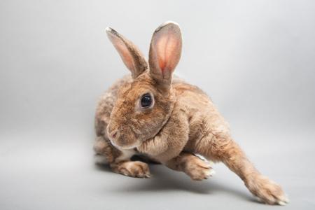 Fast running bunny rabbit on a seamless light background Stock Photo