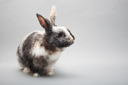 Adorable little bunny rabbit looking suspisiously in the camera