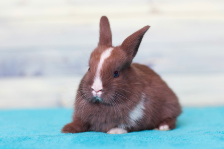 Cute brown baby bunny staring wary in the camera Stock Photo