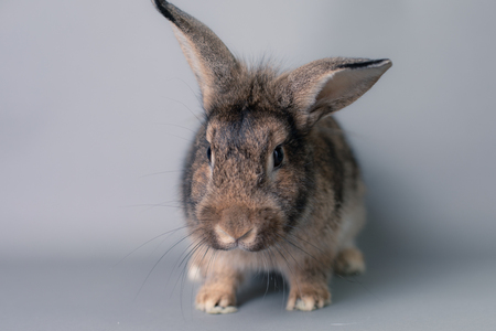 Incredulous little baby bunny rabbit looking at the camera. Adorable smart face.