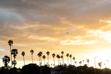Beautiful sunset with palm silhouettes and a helicopter flying on a golden sunset sky.