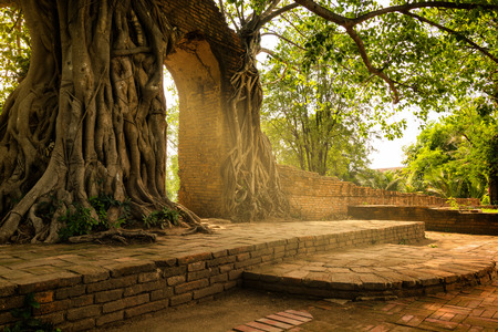 Giant tree and roots cover the old brick gate of temple in Thailand Reklamní fotografie