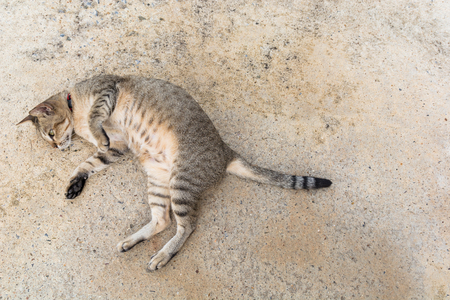Cute cat laying down on cement road in Thailand