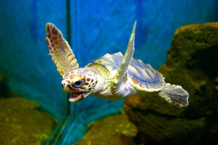 snappy: Snappy The Hawksbill Turtle