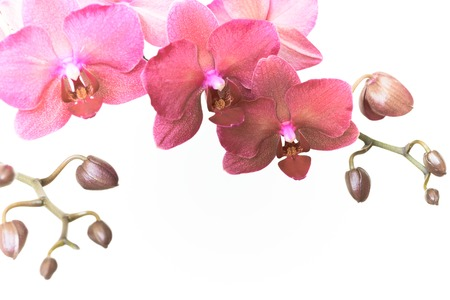 Magenta orchid branche with copy space. Retro toned.