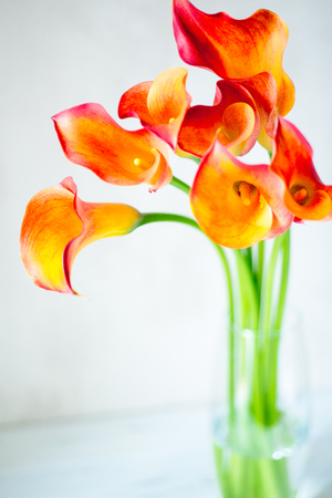 Bouquet of fresh orange Calla lilly flowers in glass vase