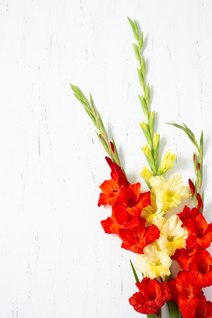Bouquet of fresh yellow and orange gladiolus flower close-up on white wooden background with copy space