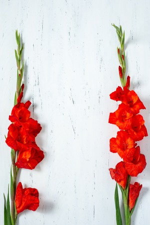 Bouquet of fresh orange gladiolus flowers close-up on white wooden background with copy space